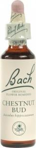 Bach Flower Chestnut Bud 10ml