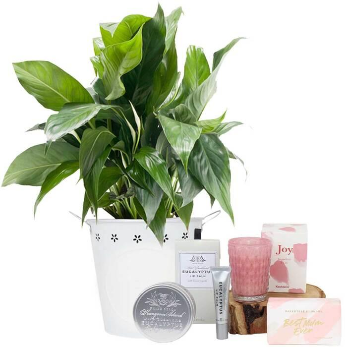 Image of Mothers Day Peace Lily Pamper Hamper