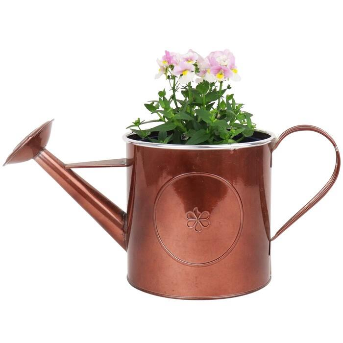 Image of Mothers Day Nemestia in Watering can
