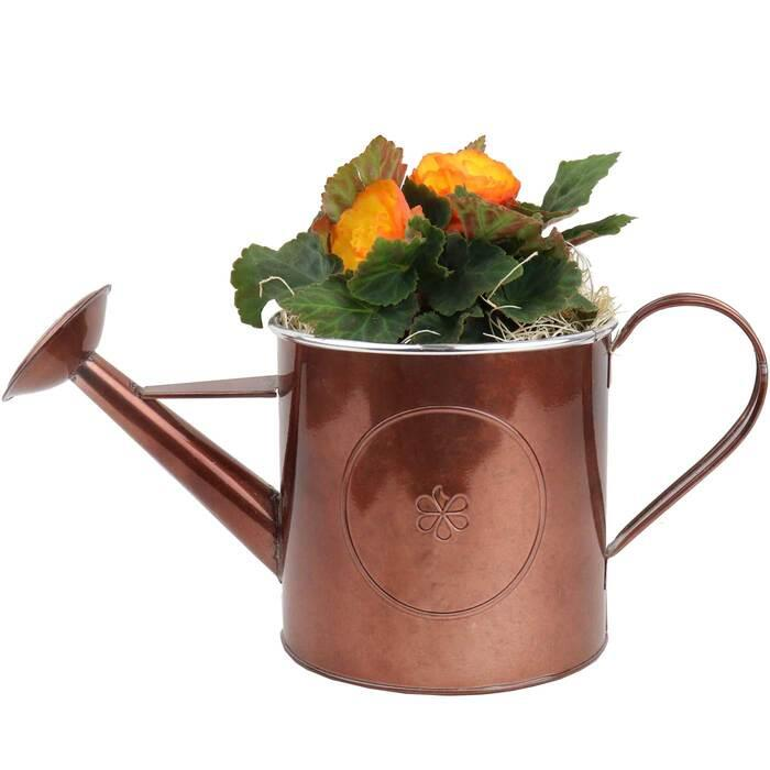 Image of Mothers Day Begonia in Watering can