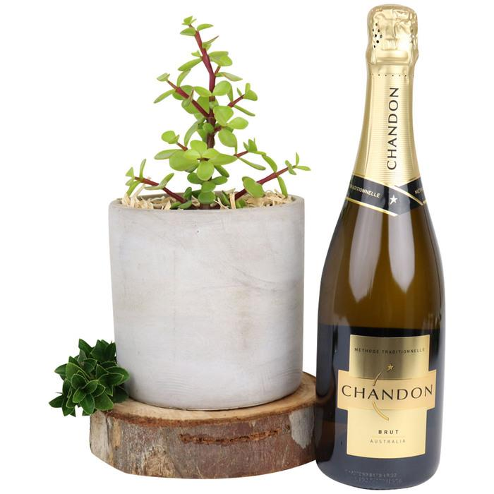 Image of Mothers Day Money Tree & Chandon