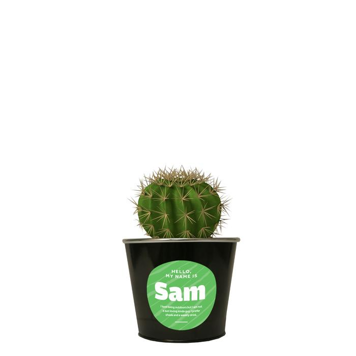 Image of Mothers Day Sam the Cactus
