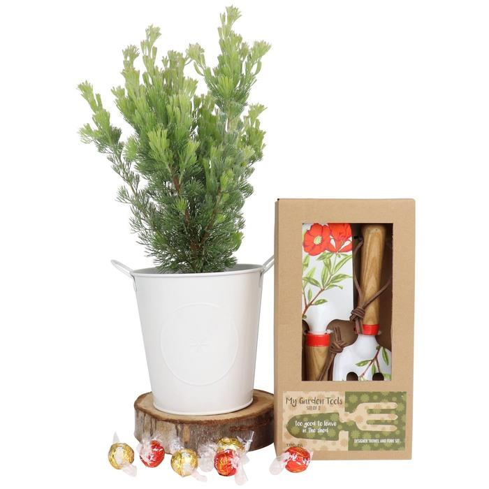 Image of Mothers Day Festive Woolybush and Gardening Gift