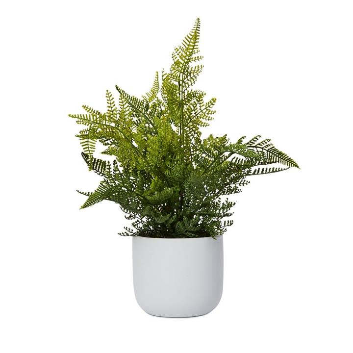 Home Republic Lennox Potted Fern Lace 30x30x30cm White/Green - Lacefern By Adairs