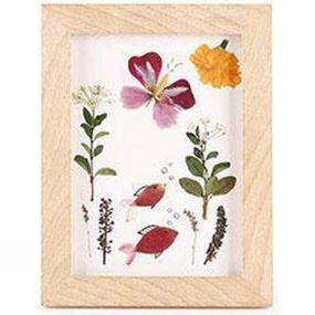 Kikkerland Huckleberry Pressed Flower Frame Art No Colour
