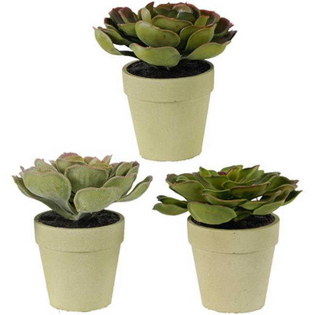 Image of Durie Plants Set Of 3