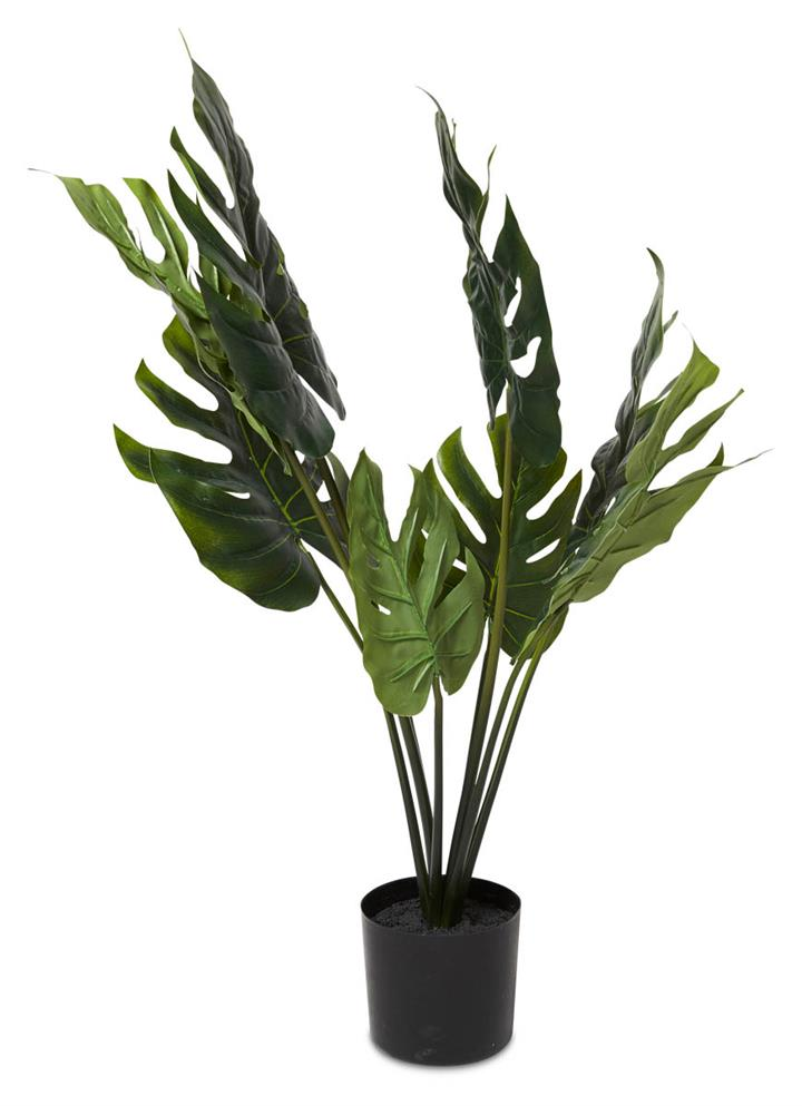Image of Grand Split Philo Bush in Plastic Pot 63cm - Green