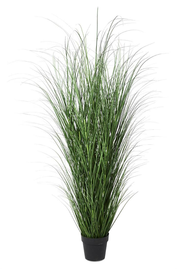Image of Coastal Grass in Plastic Pot 125cm - Green