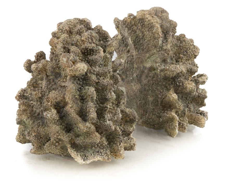 Image of Set of Polyresin Coral Bookends