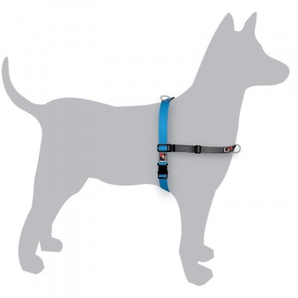 Black Dog Balance Dog Halter with Front & Back attach D-Rings - Large - Blue