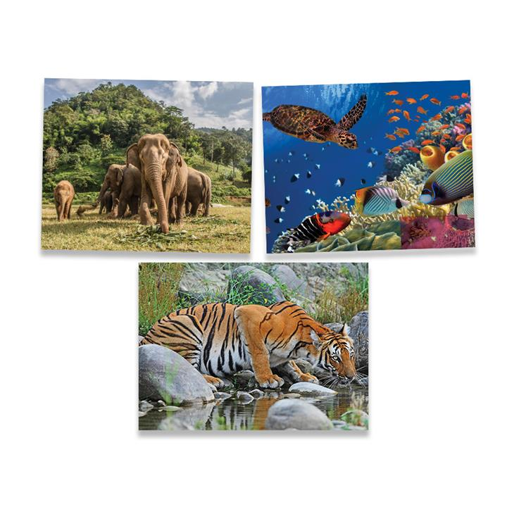Image of Save the Planet - Coral Reef 1000 pc
